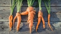 Wonky veg: pubs could save money